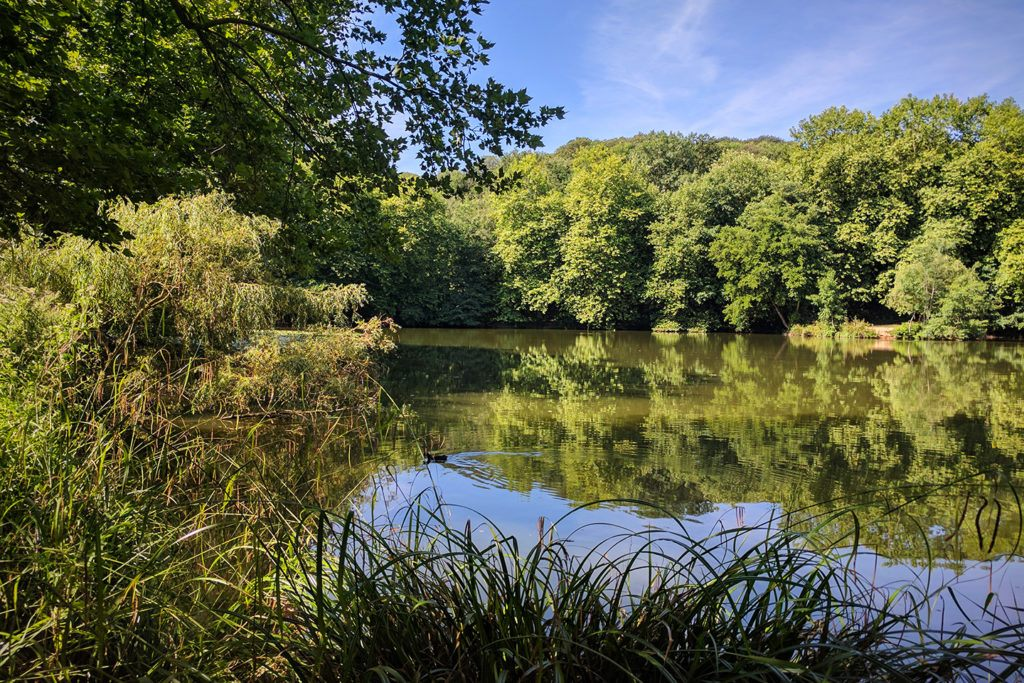 Balades près d'un étang de Meudon