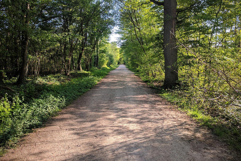 Balade Au détour de la forêt de Grosbois
