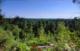 Vue sur la forêt de Fontainebleau