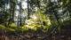 Randonnée à Bruxelles forêt de Soignes