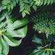 En Nature Simone - les plantes