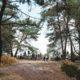 Randonnee Fontainebleau