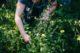 Découvrir la flore sans la piétiner ni la cueillir