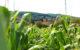 Champs sur les bord de Saône